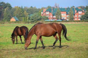 Ogólnopolski Dzień Konia